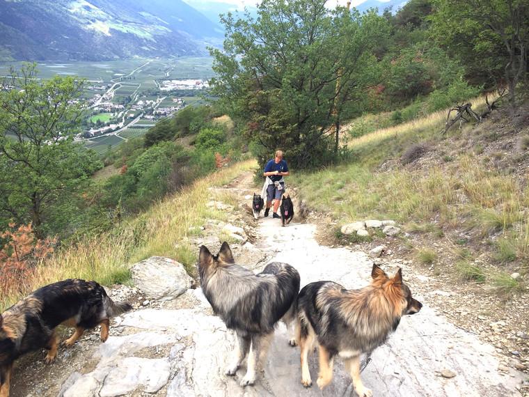 Urlaub mit hund pension residence obkircher for Pension mit hund nordsee